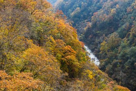 colorful leaves in autumn from New Noboribetsu bridge