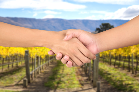 wineyard: closeup mens handshaking on wineyard background
