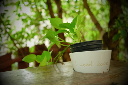 white plant pot with words I need love decorated on wood table