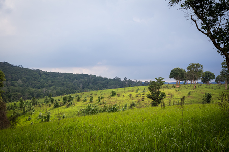 tree and meadow view on cloudy day at Khao Yai national park