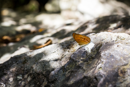 orange wings butterfly on stone in forest with light and shadow Stock Photo