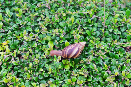 top view snail crawling on plant