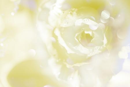 blue petals: closeup soft colorful fabric rose petal for background Stock Photo