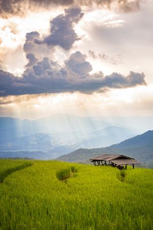 farmhouse in rice field scenery at Chiang Mai, Thailand, Pa Pong Piang Stock Photo