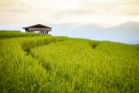 vibrant cottage: cottage in rice field scenery at Chiang Mai, Thailand, Pa Pong Piang