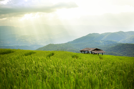 farmhouse in rice field scenery at Chiang Mai, Thailand, Pa Pong Piang Stock Photo