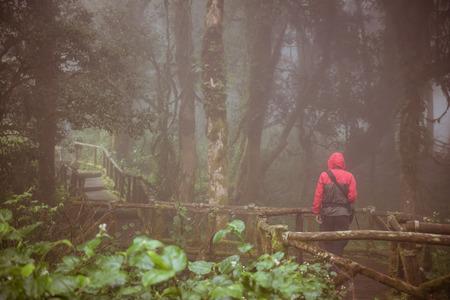 bark rain tree: man walking on trail for nature studying at Doi Inthanon National Park, Thailand Stock Photo