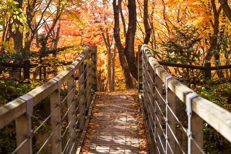 wood bridge in autumn with colorful leaves at Nakano Momiji, Aomori prefecture, Japan