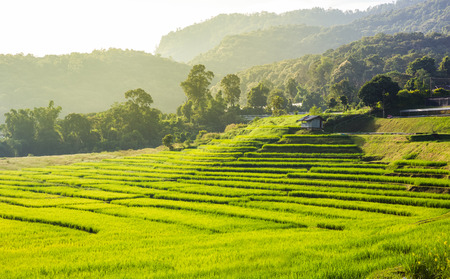 morning scenery of rice field at Mae Klang Luang, Chiang Mai, Thailand Standard-Bild - 116415904