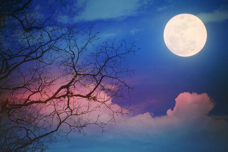 arbre mort et ciel nocturne fantastique avec nuage, étoiles et lune