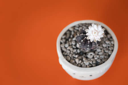 top view of cactus with flower pot on orange color background