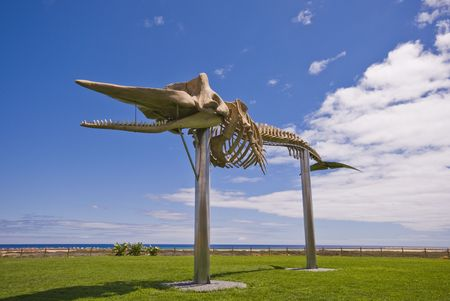 Skeleton of a Sperm Whale. Photo was taken in Morro Jable on the island Fuerteventura (Spain) Stock Photo - 3055013