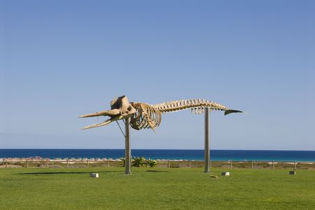Skeleton of a Sperm Whale. Photo was taken in Morro Jable on the island Fuerteventura (Spain) Stock Photo - 3055022