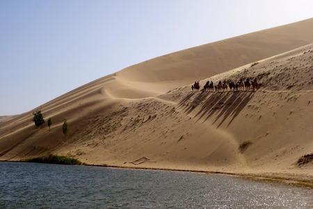 Desert caravans