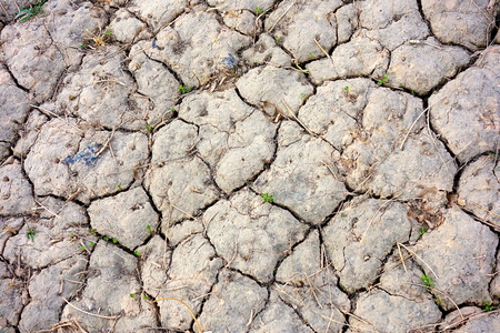 Dry hard ground with seedlings