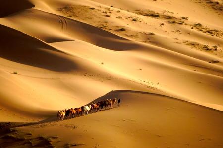 Desert caravans photo