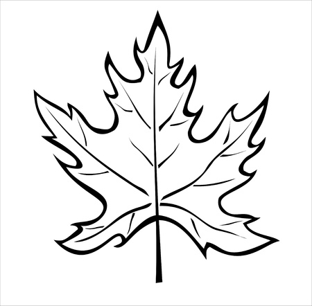 maple leaf: the silhouette of the maple leaf isolated on white