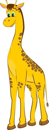 a giraffe: giraffe
