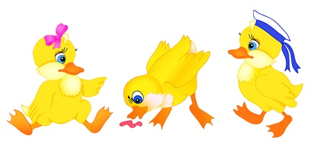 set of little duckling cartoon with isolation on a white background Vector