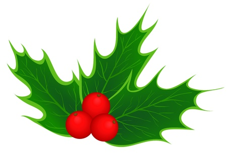 traditional Christmas holly leaves and berries Stock Vector - 16688567