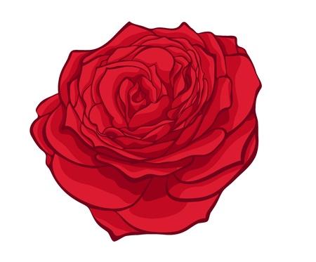 rose tattoo: stylish red rose isolated on white