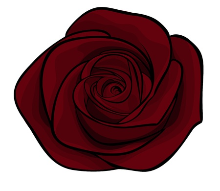 beautiful maroon roses alone, isolated on a white background Ilustração