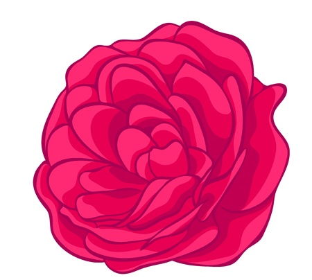 pink rose isolated on white  floral design element Vector