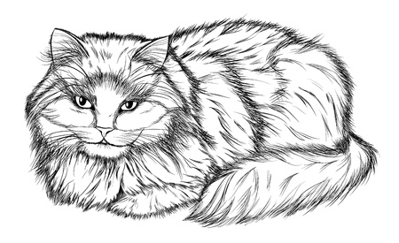 black and white line drawing: lying cat, black and white pencil drawing Illustration