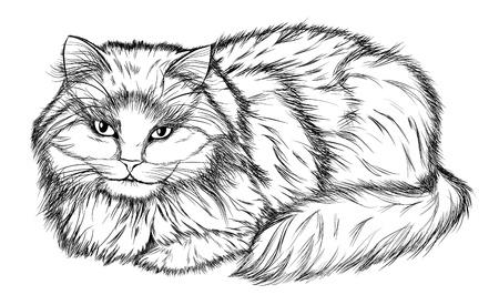 Dibujos artísticos a lápiz de perros y gatos - Imagui