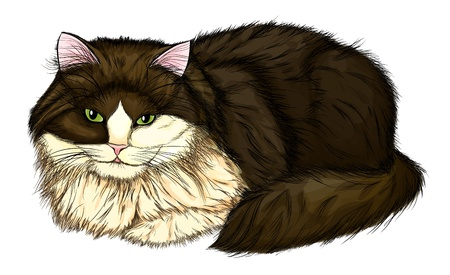 beautiful, large and fluffy cat  Painted in a realistic style that imitates watercolor