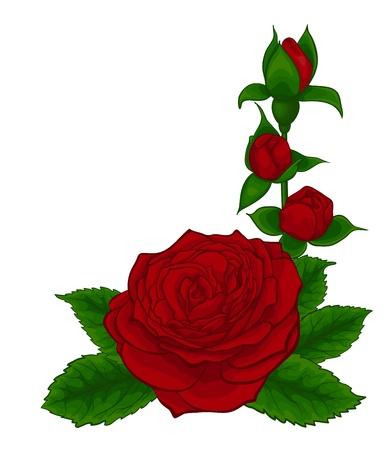 beautiful bouquet of red roses, decorative floral design element, isolated on white Vector