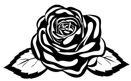 abstract black and white rose. Close-up isolated on white background Illustration