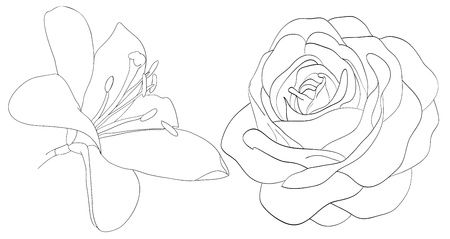 set of shape roses and lilies isolated on white. Many similarities to the authors profile Ilustração
