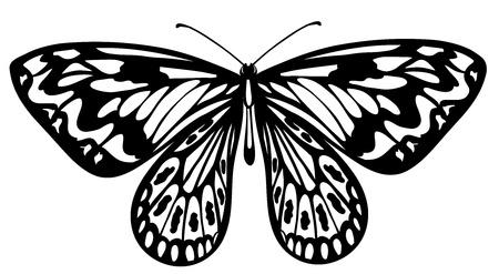 Beau papillon noir et blanc isolé sur blanc Banque d'images - 18276278