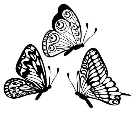 mariposas volando: conjunto de Hermosa mariposa en blanco y negro aislado en blanco