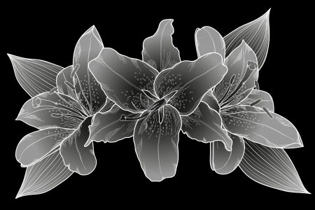 painted image: beautiful bouquet of lilies. Black, white and gray. Many similarities to the authors profile