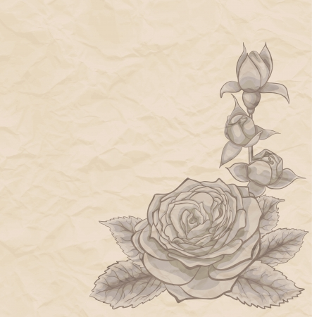 Vintage background. Beautiful rose in the corner of mint, old paper. Many similarities to the authors profile Vector