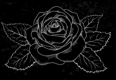 flowers close up: beautiful white rose outline with gray spots on a black background  Many similarities to the author