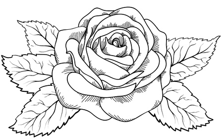 beautiful rose in the style of black and white engraving. Many similarities in the profile of the artist Illustration