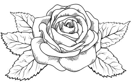 rose: linda rosa no estilo de gravura em preto e branco. H Ilustra��o