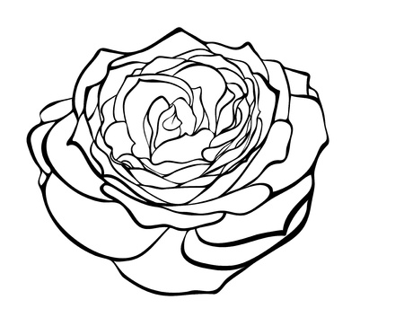 beautiful rose in the style of black and white engraving.. Many similarities to the author's profile Stock Vector - 21045568