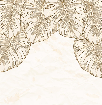 vintage background  Old crumpled paper with leaves Monstera with outline in the corner   Vector