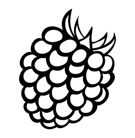 black raspberries: monochrome illustration of raspberry Many similarities to the author Illustration