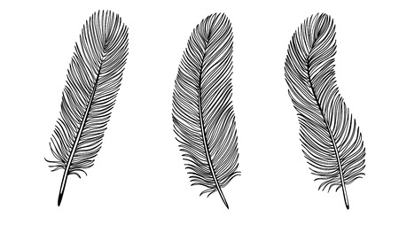 Set of Black and White Feather. Stock Vector - 22956789