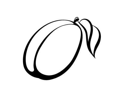 Vector monochrome illustration of plum Stock Vector - 22956795