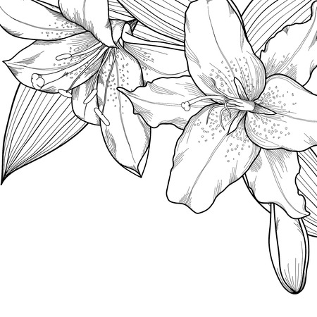 graphic black and white lilies. Decoration on a white background.  Vector