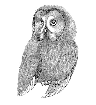 owl tattoo: sketch owls drawn with pen and ink in a graphic style drawing points and lines. Beautiful figure for a tattoo