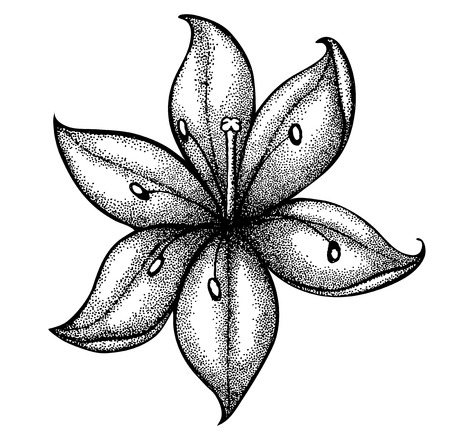 tatoo: lily painted in a graphic style points and lines. A great figure for a tattoo