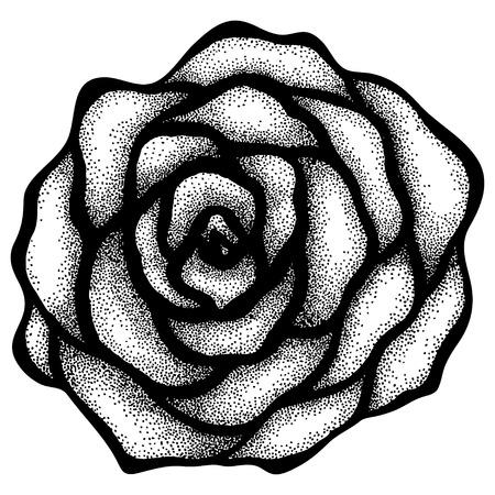 rose blanche: R�sum� est pass� de dessin � main lev�e dans un points et lignes de style graphique. Peut �tre utilis� pour le dessin tatouage Illustration
