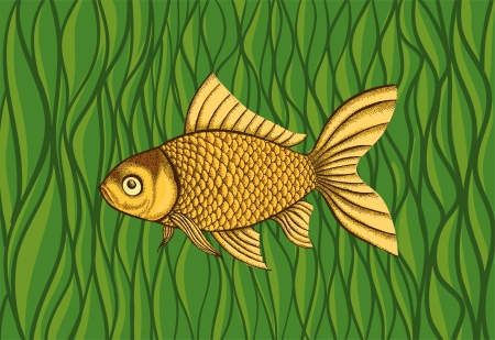 Goldfish on a background of green algae  Many similarities to the author Stock Vector - 25041953